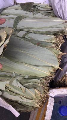 黑龍江省哈爾濱市五常市粽子葉 國產粽葉