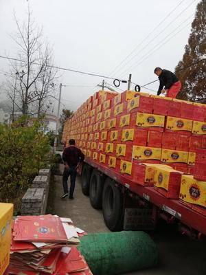新疆維吾爾自治區阿克蘇地區阿克蘇市新疆大棗 和田俊棗