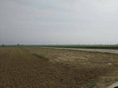 河北省滄州市東光縣水澆地 土地肥沃,灌溉方便,水電齊全,交通便利,