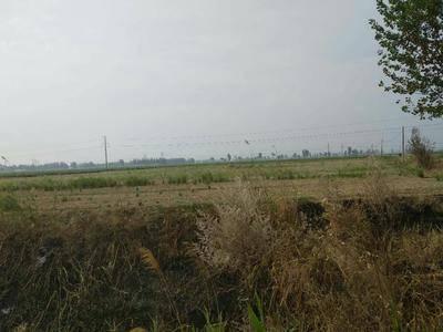 河北省滄州市東光縣水澆地 轉包 5~10年 100~500畝