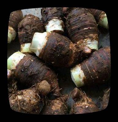 廣西壯族自治區柳州市柳南區荔浦芋頭 6cm以上