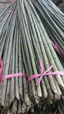 湖北省襄陽市谷城縣 產地各種規格竹竿批發2-3米菜架桿,4-8米大棚竹竿,撐樹