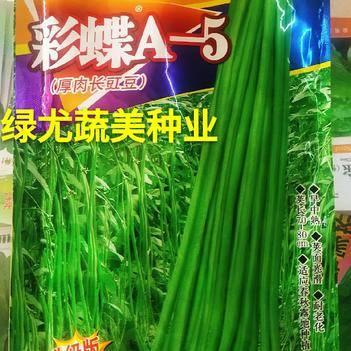 油青豆角种子 华赣豇豆自主研发,公认的高端好品种。越夏种植专用,翠绿豇豆