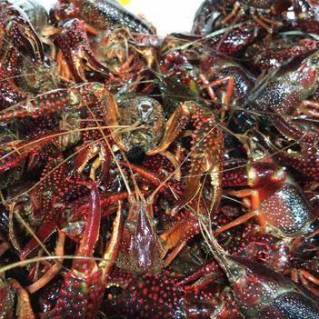 湖北省天门市小龙虾养殖协会,位于鱼米之乡的湖北天门,长期大