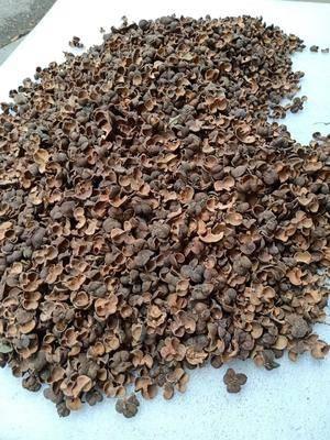 廣西壯族自治區來賓市金秀瑤族自治縣 5-10年的野生紅茶果殼