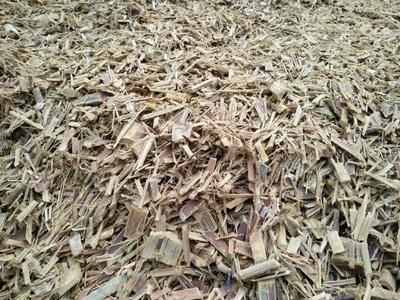 廣東省清遠市英德市 竹片紙漿原料500一噸