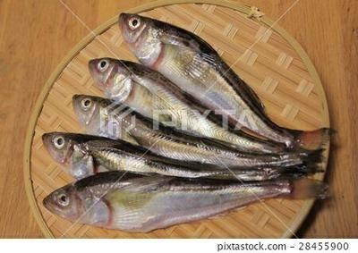 遼寧省丹東市振興區 大量出售朝鮮雷魚!價格優惠需要的話聯系我,價格優惠
