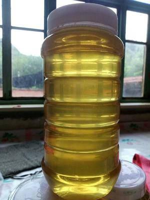 遼寧省朝陽市凌源市洋槐蜂蜜 塑料瓶裝 2年以上 100%