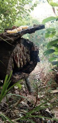 云南省西雙版納傣族自治州勐海縣 高山蜂蜜,高山生態普洱茶,現在有貨,歡迎采購