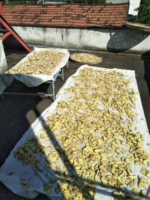 浙江省紹興市嵊州市 優質干姜片,5斤起批。