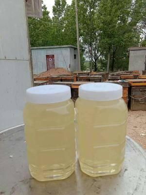 吉林省長春市綠園區洋槐蜂蜜 桶裝 2年 100%