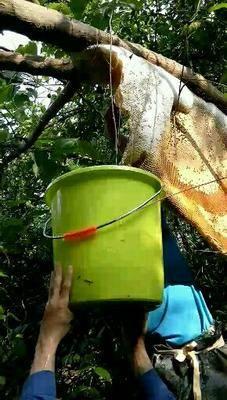 廣東省珠海市斗門區野生蜂蜜 塑料瓶裝 2年以上 100%