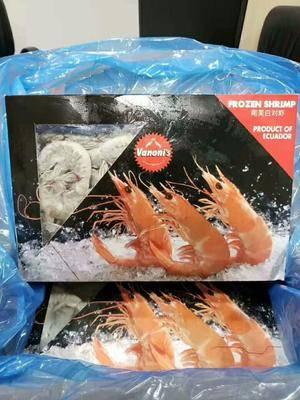 天津和平區凍南美白對蝦