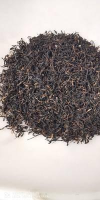 云南省普洱市思茅區 普洱茶滇紅茶
