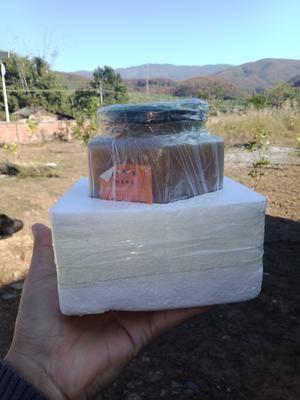云南省西雙版納傣族自治州景洪市野生蜂蜜 新蜜上架