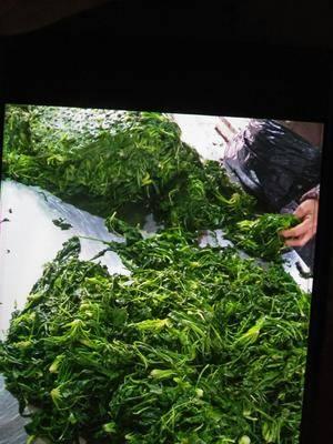 河南省開封市杞縣速凍薺菜 薺菜質量好!品質優,量大從優。