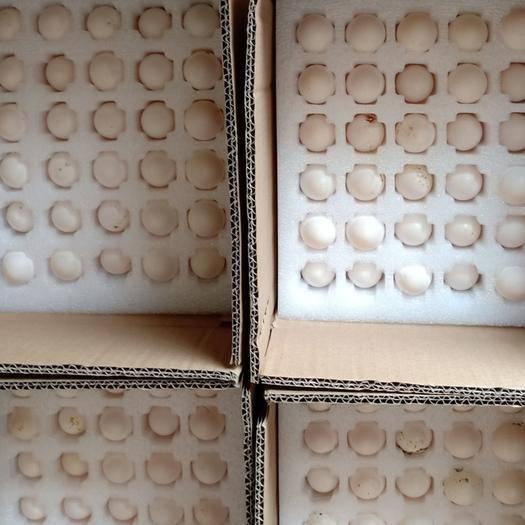 广东省惠州市惠城区 新鲜鸽子蛋60枚装(食用)