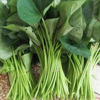農家自種紅薯葉新鮮山芋梗紅薯梗時令蔬菜無農藥蔬菜3斤包郵