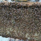 蜂蜜質量保證,無任何添加劑,全國包郵