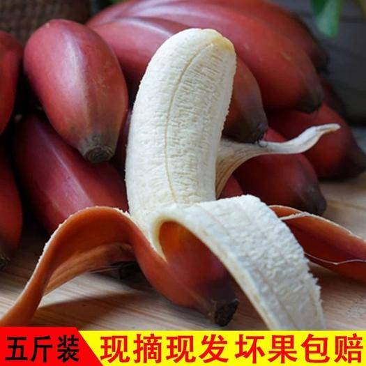 紅香蕉 火龍蕉生蕉發貨無催熟劑泡沫箱+真空凈重5斤裝包郵無痕發貨