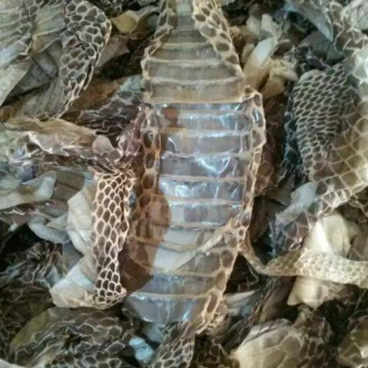 安徽省亳州市譙城區蛇蛻 蛇皮,蛇衣,一斤包郵,無需運費