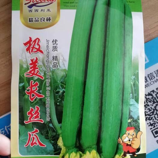 河南省商丘市夏邑县 肉质嫩香甜,极美长丝瓜种子