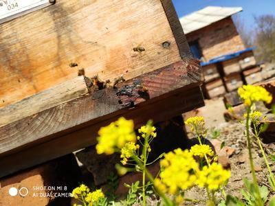 黑龙江省双鸭山市饶河县蜂花粉 24个月以上