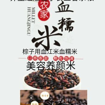 黑糯米血糯米农家自种棕子米养生养颜米5斤装包邮