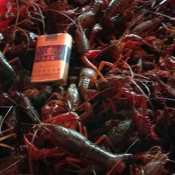 湖北监利精养小龙虾  7月7到货价
