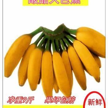 廣西特產大芭蕉 酸甜牛蕉 九斤一箱包郵 一件代發 果園直銷