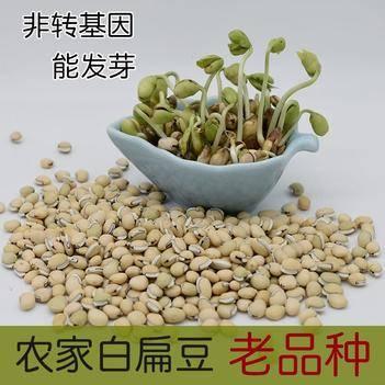 批发云南老品种白扁豆 非转基因 有黑点才正宗