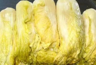 吉林省白山市靖宇縣其他酸菜 酸菜正宗東北大缸酸菜免切小霞酸菜絲