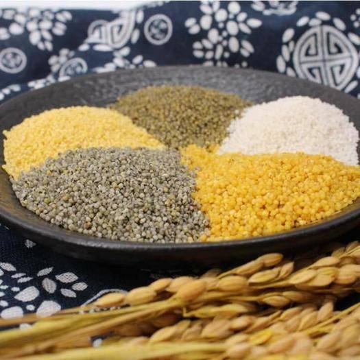 甘肃省庆阳市环县黑小米 五色米,月子米,黄土高原优质谷子为原料