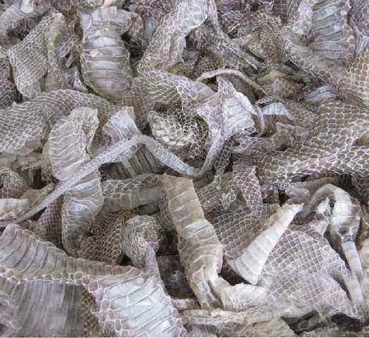 河北省保定市定州市 蛇蛻   批發零售各種中藥材  花茶  保健品