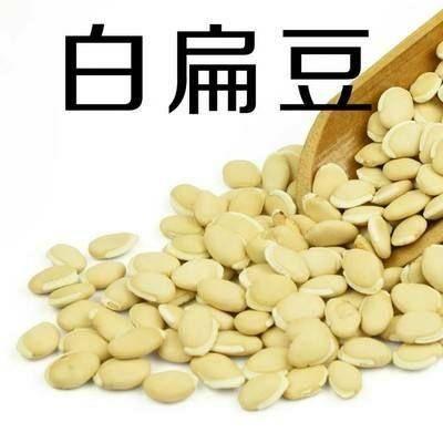 河北省保定市定州市 白扁豆