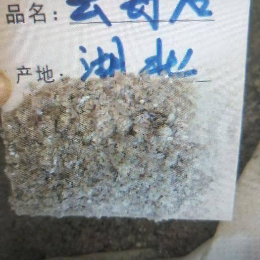 河北省保定市安国市云母 矿物类中药 产地货源 平价直销 代打粉 袋装