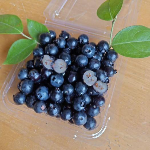 广西壮族自治区崇左市宁明县 良丰鲜果~蓝莓