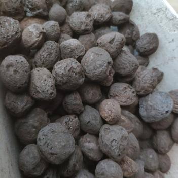 乌梅 乌梅碳