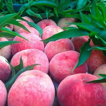 當季新鮮水蜜桃脆桃子孕婦水果5斤5斤5斤毛桃非雪桃軟桃