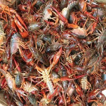湖北小龍蝦青紅蝦4.3--6.7滿肉規格硬底板干凈產地直發