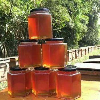荔枝蜜鮮蜜蜂農自產口味純正19年新蜜批零