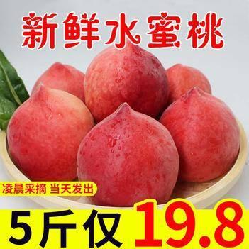 新鮮水蜜桃5斤包郵19.8