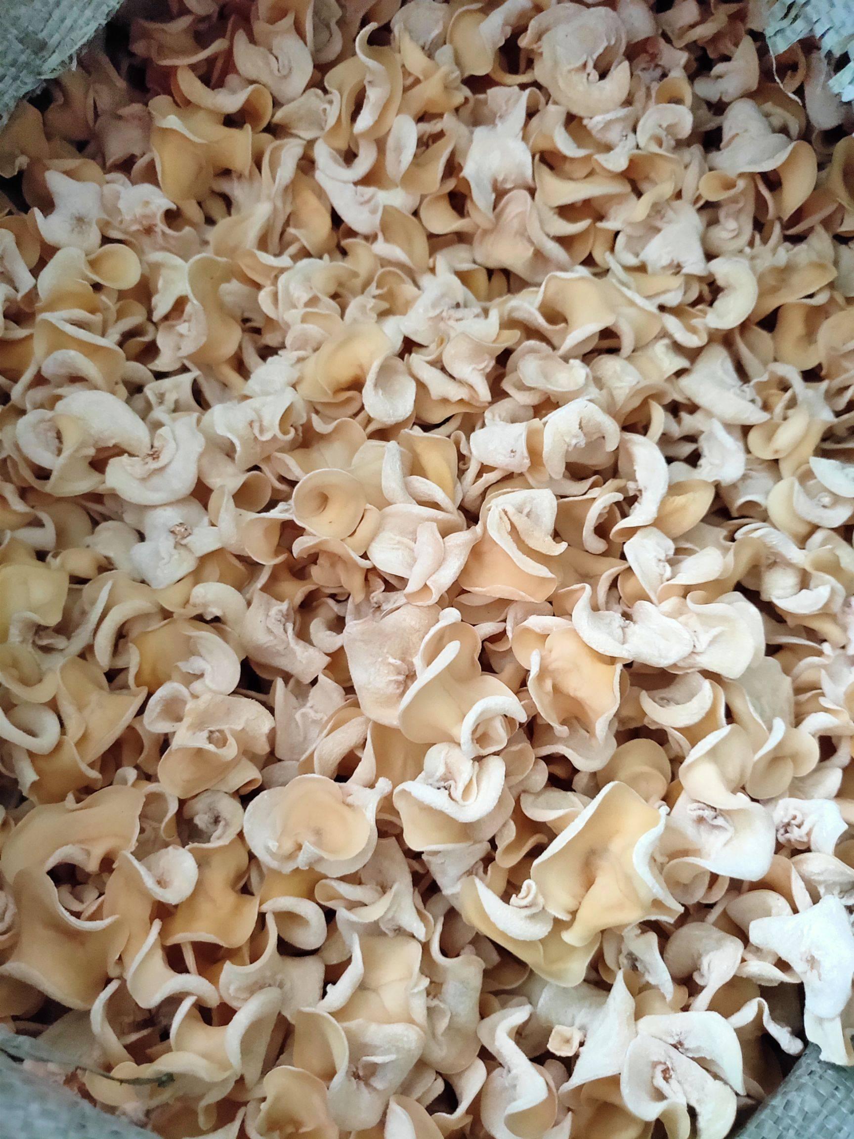 [白木耳批发]白玉木耳,白木耳,特级精品,小碗耳,送礼首选价格45元/斤