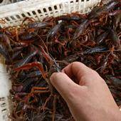 红壳小龙虾 789钱