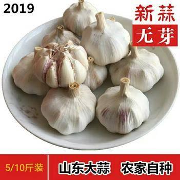 金乡大蒜 5~5.5cm 多瓣蒜