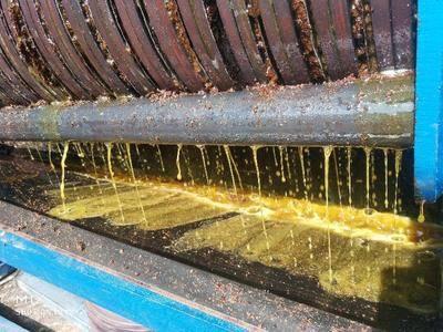 广西壮族自治区柳州市三江侗族自治县 50年树龄的山茶油
