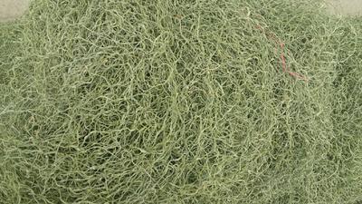 安徽省亳州市谯城区 干豆角丝,一清到底,纯天然无公害食品。合作社共赢
