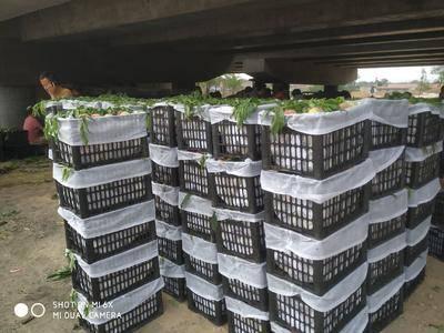 山西省运城市河津市春美桃 春美蜜桃大量上市,需要的老板赶紧联系