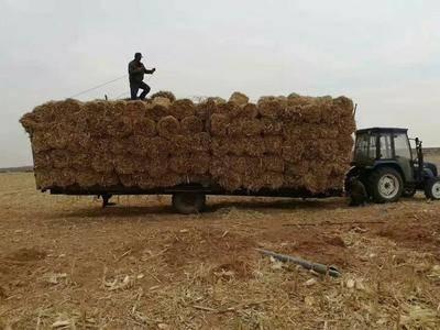 山东省菏泽市郓城县粉碎打捆机 小麦玉米秸秆粉碎捡拾打捆一体机