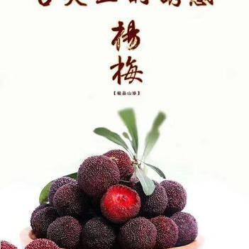 楊梅之鄉~靖州楊梅讓您的生活吐氣揚眉!銷售楊梅苗木